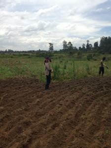 Fertilizing time